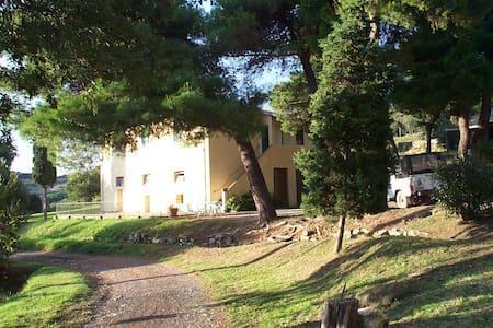 Casa Freddani  - Livorno