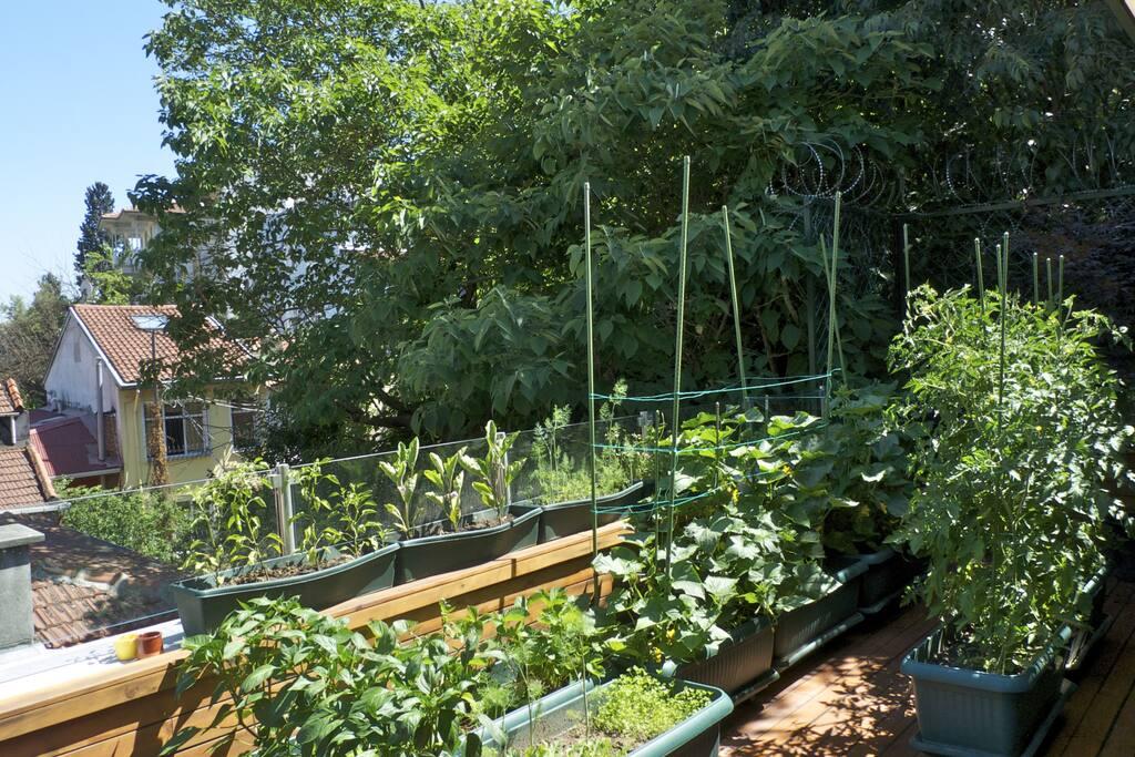 Organic vegetable garden for fresh salads...