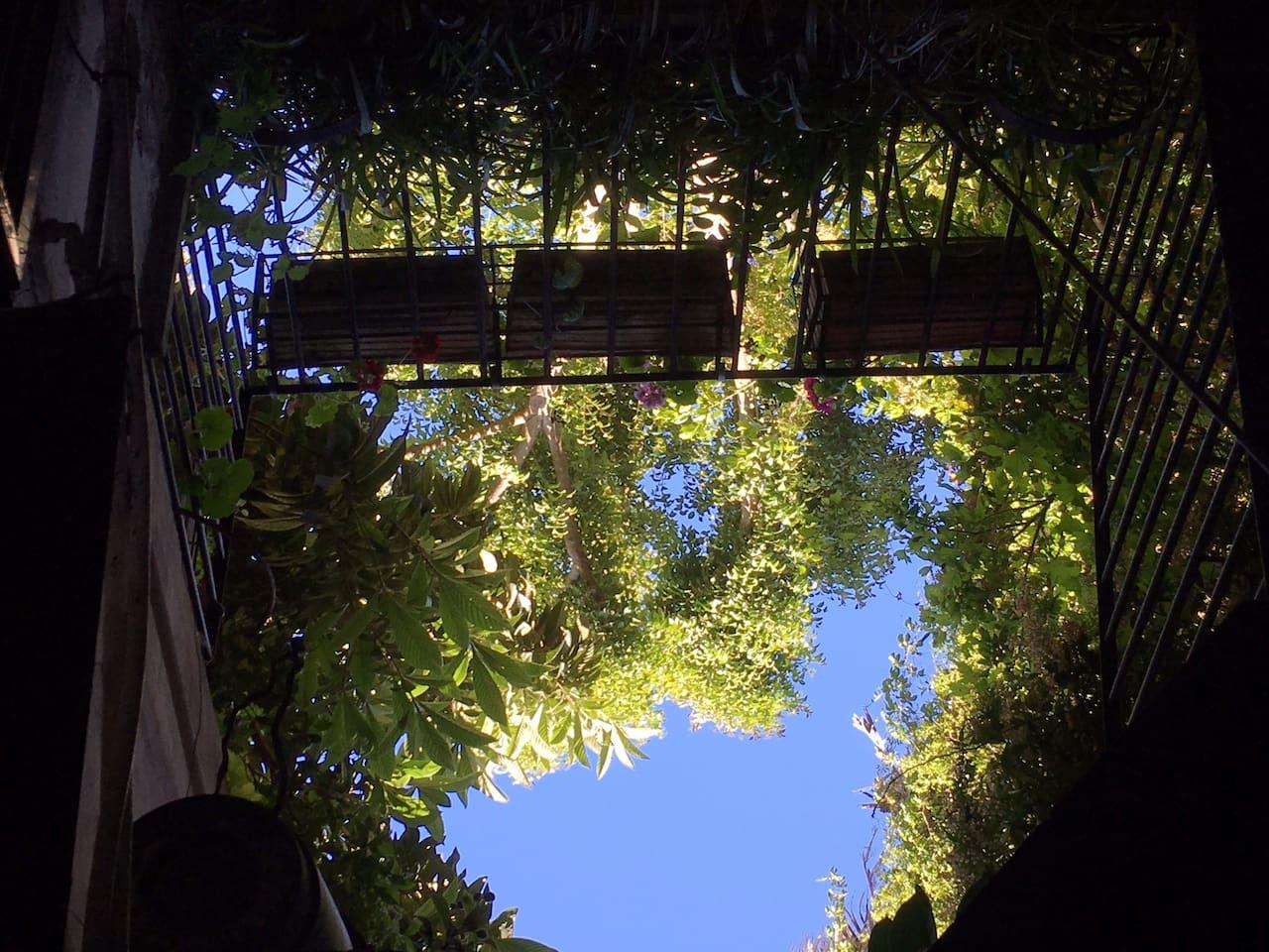 Da sotto in su alberi pieni di usignoli