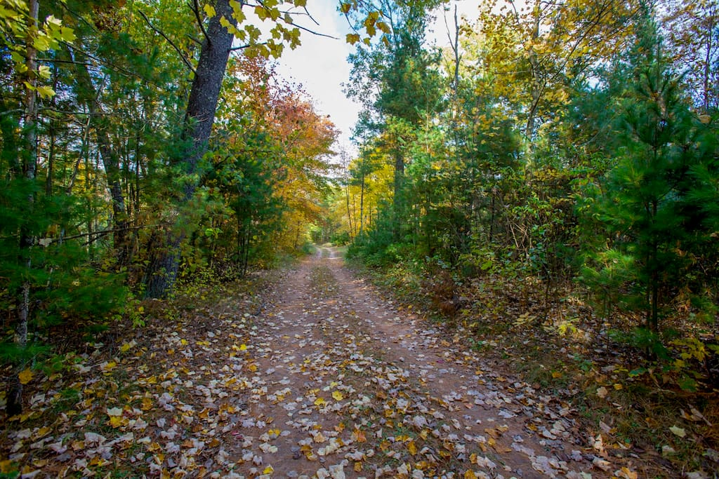 Long scenic tree-lined driveway leads to a very private getaway.  Driveway will be plowed in winter. It's wide and has ample parking and turn around space at end.