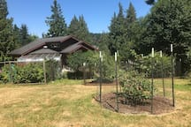Backyard view of some of the fruit trees and garden and house