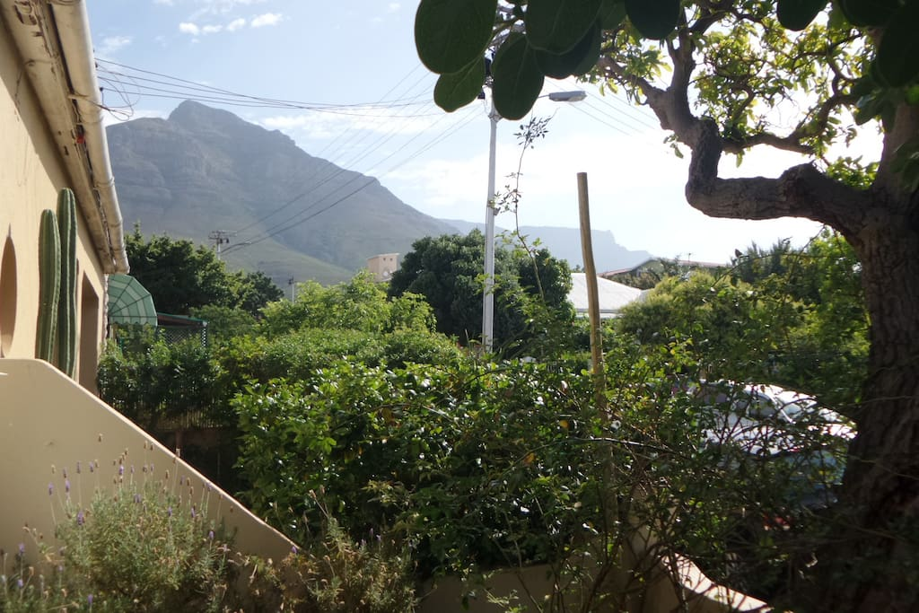 Table Mountain and Devil's Peak from the front yard