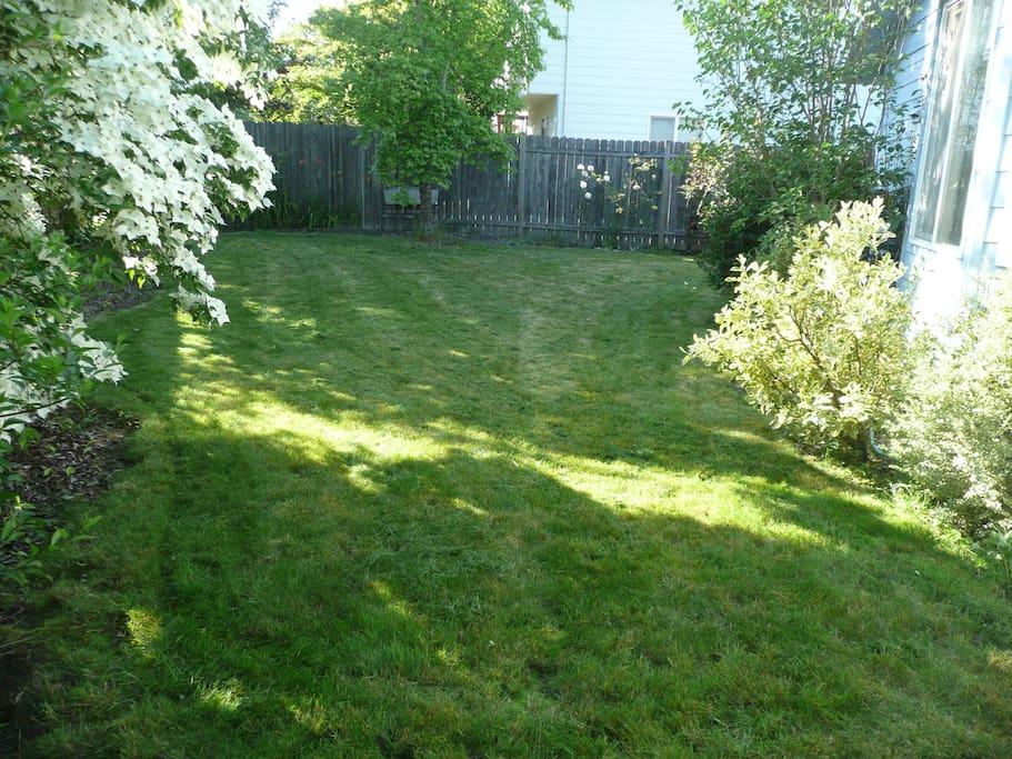 Back yard.