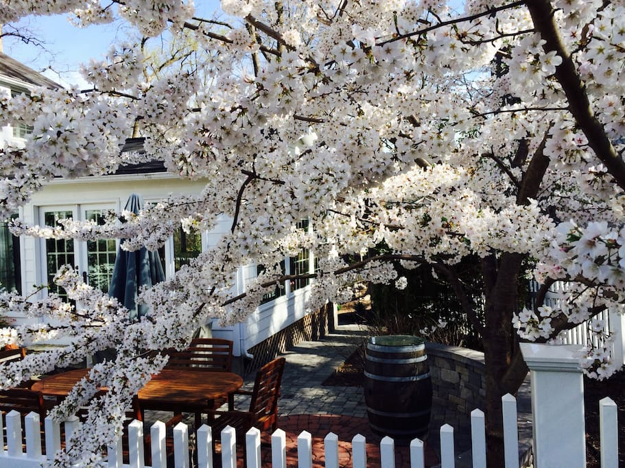 Front Patio great for entertaining with Cherry Blossoms in the spring