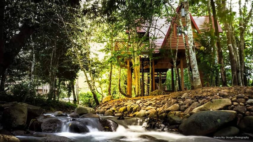 Romantic Tree House at Fifty4Ferns Resort