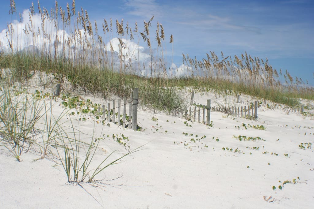 Beautiful white sandy beach with sea oats