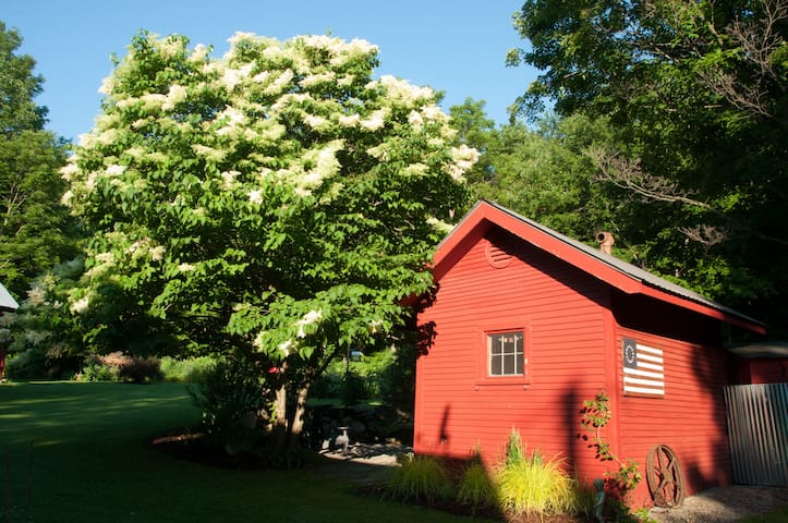 Lilac tree blooms in June.