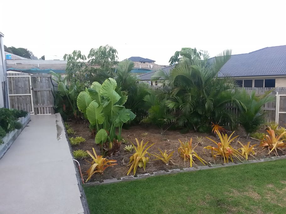 More backyard