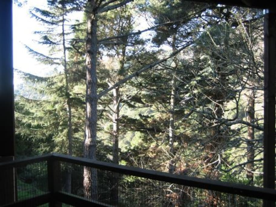 Private entrance with deck...among the trees