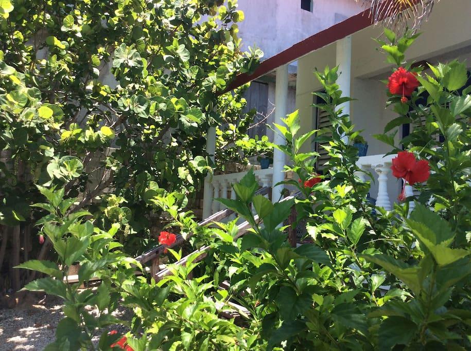 El jardín y la vegetación