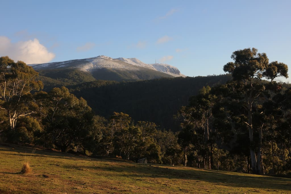 View of Mt Wellington from our main paddock