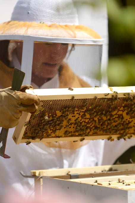Inspecting the hive.