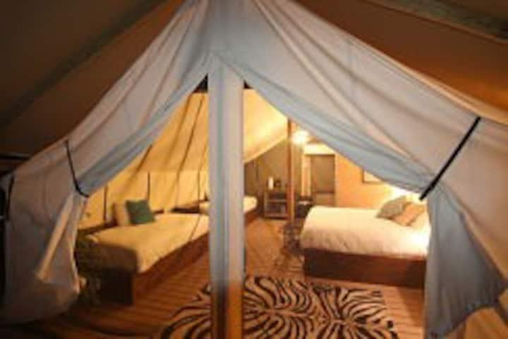 Safari Glamping Tent