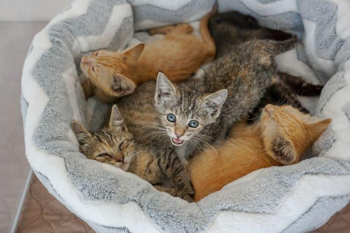 Kitten BnB, a purr-fect place to unwind