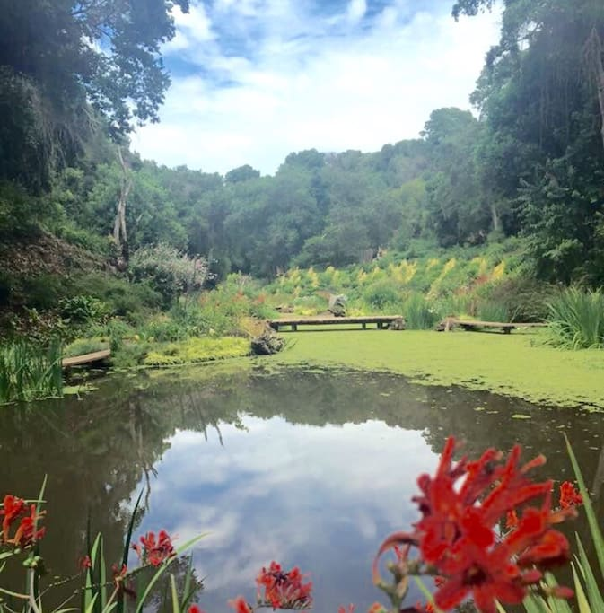 Gyverni garden. Jardin Gyverni. En parque Tricao.