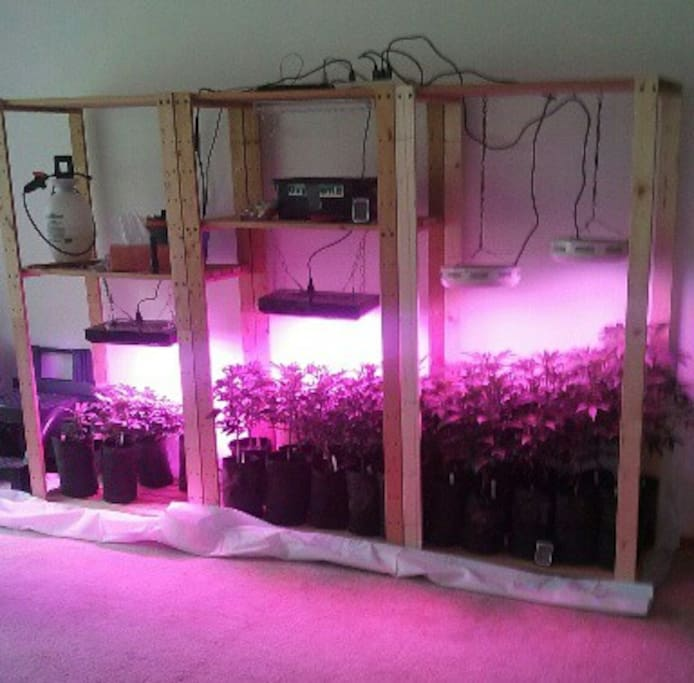 Our inside grow is in the contemplation room.