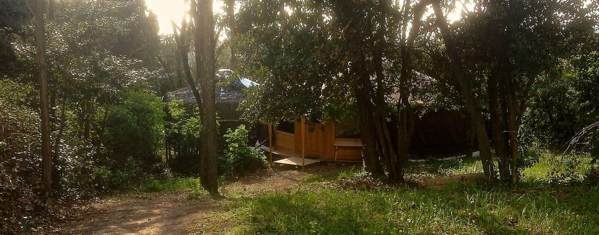 Yurta originale mongola nel bosco!