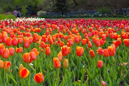 SPRINGTIME ESCAPE*native wildflowers*scenic drives - Maggie Valley