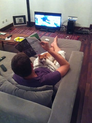 living room - chilling with rex (the cat) while watching tv