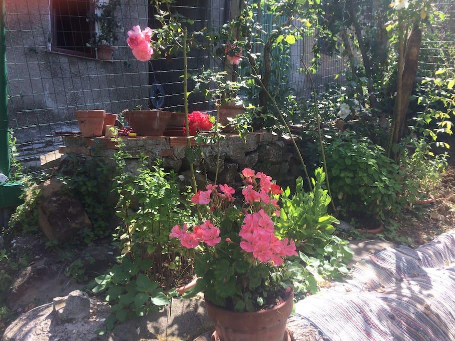 ingresso giardino 02