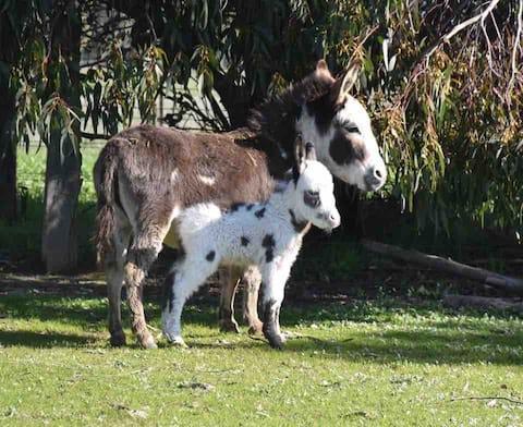 Malakai Alpaca & Miniature Donkey Farm Stays