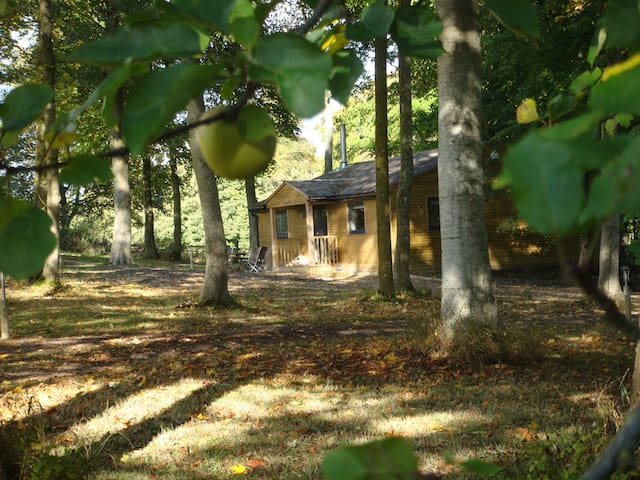 Luxurious cabin in the woods near Longleat - Warminster - Cottage