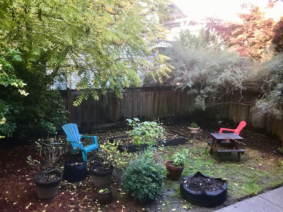 Shared pet-friendly back yard
