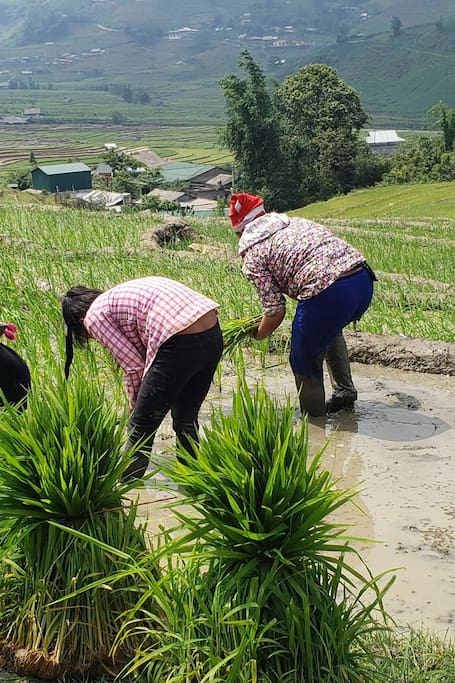 My family planting rice in our rice terraces