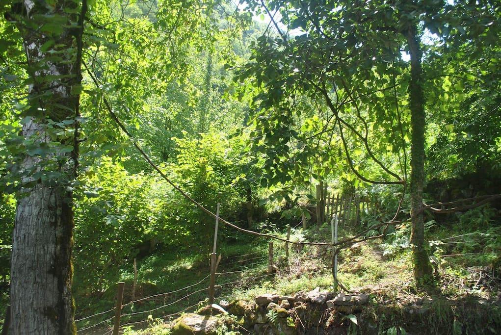 возле дома находится лес