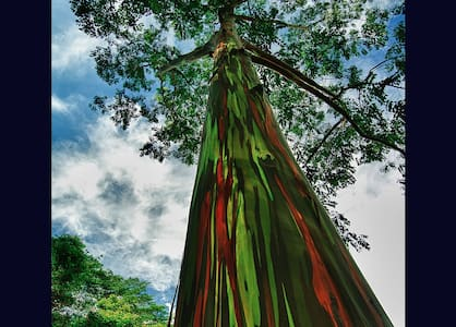 Pet Friendly Rainbow Cottage near Lava Viewing! - Pāhoa