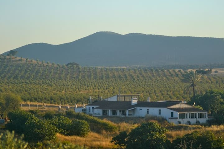 Monte da Chaminé Cottage (Green) - Safara