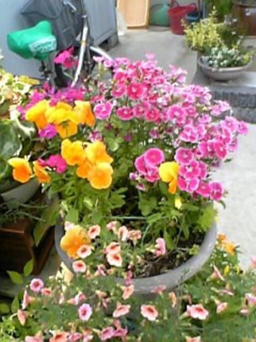綺麗なお花を育てています。