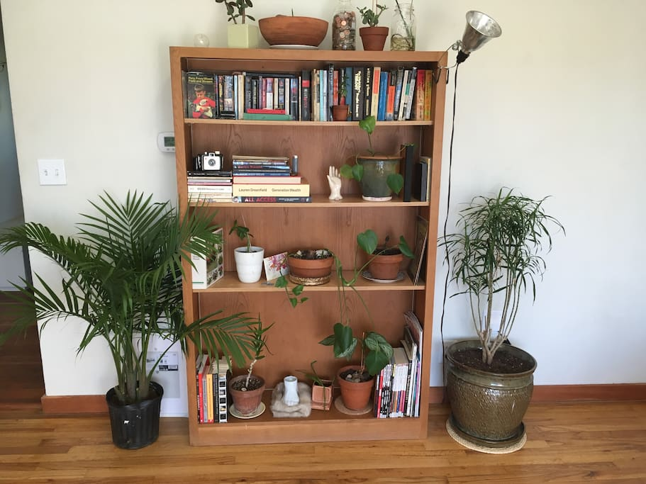 Comfortable well lit living room, with books and plants