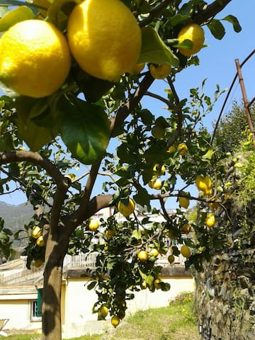 5 TERRE -Monterosso- Nice,cosy cottage with garden - Monterosso Al Mare - Wohnung