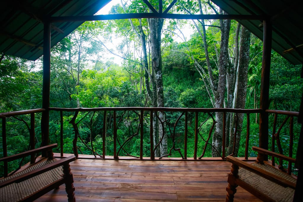 View of the jungle from the Balcony