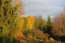 Le bois en automne