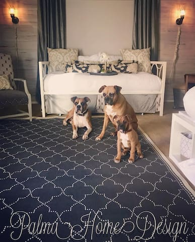 Our Boxer Boys love new guests as well as all their love!