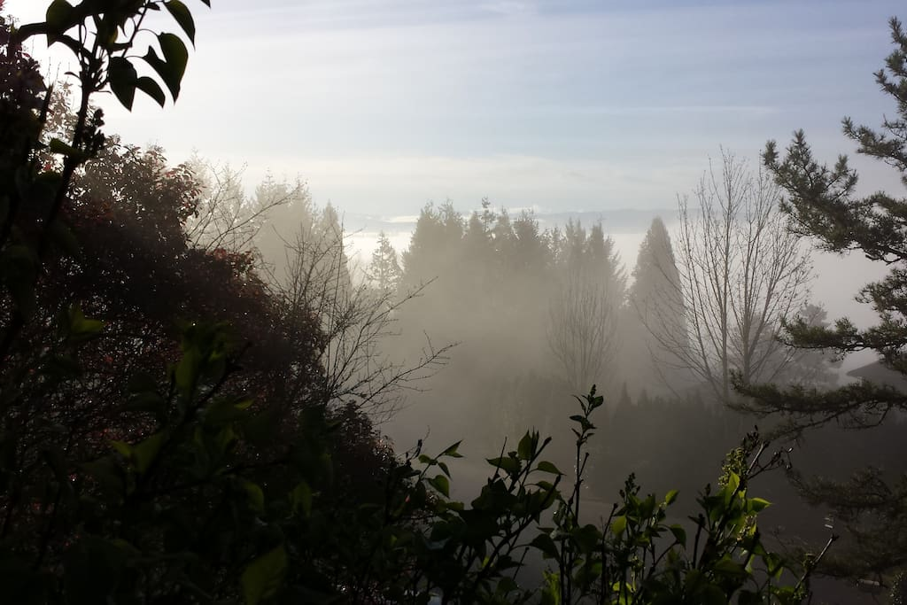 Beautiful foggy morning from front deck.