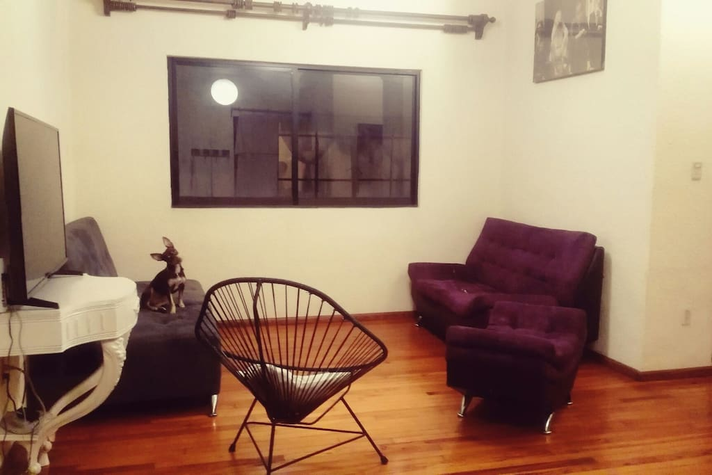 Pet Friendly Cool Place Cdmx Apartments For Rent In