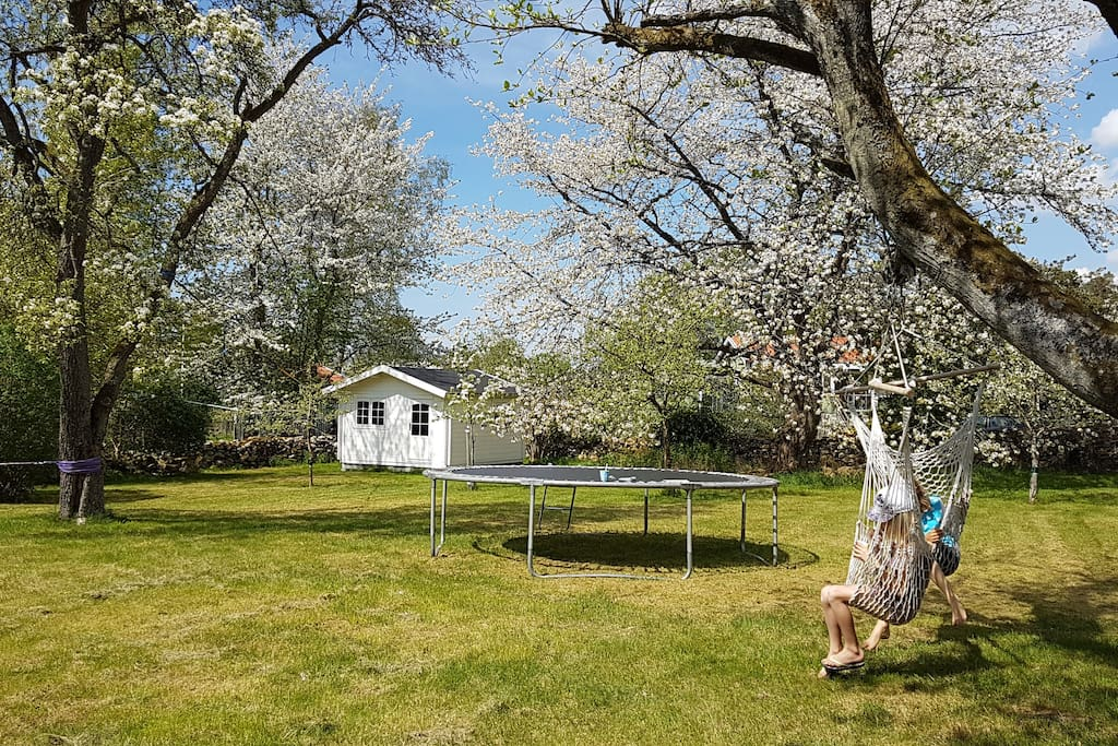 Large garden with fruit trees
