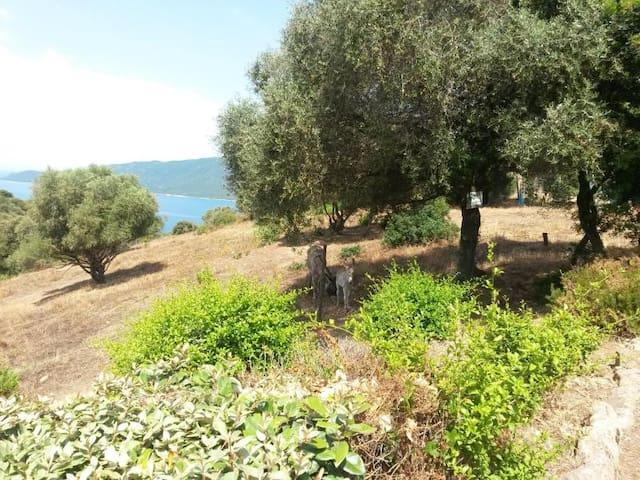 Location baie de cupabia - Serra-di-Ferro - Hus