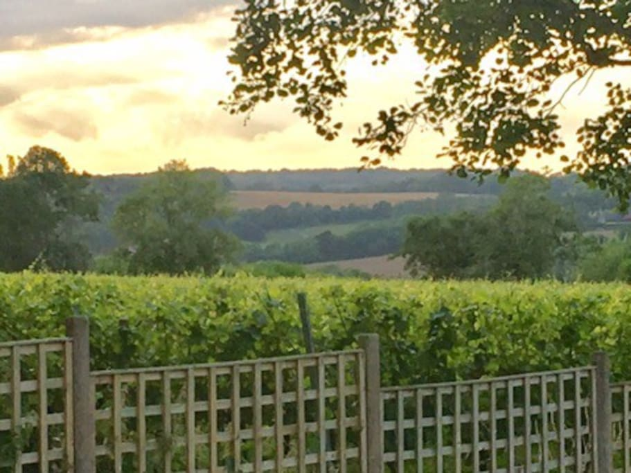 View of the vines and rolling countryside beyond - view from garden
