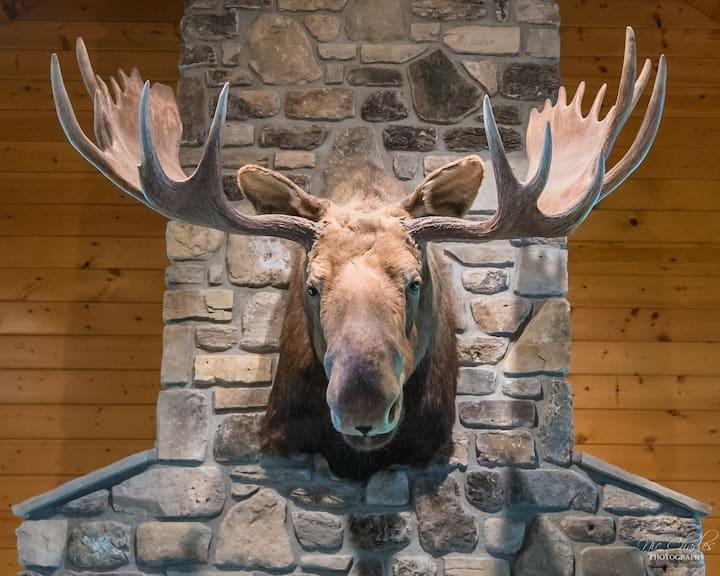 'Magnificent' Moose Manor