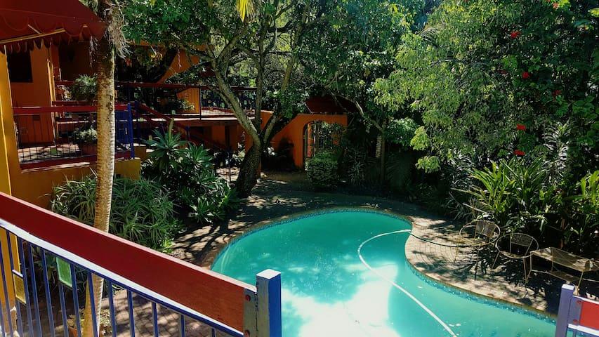 Sunny Sub-tropical Steenbok Street