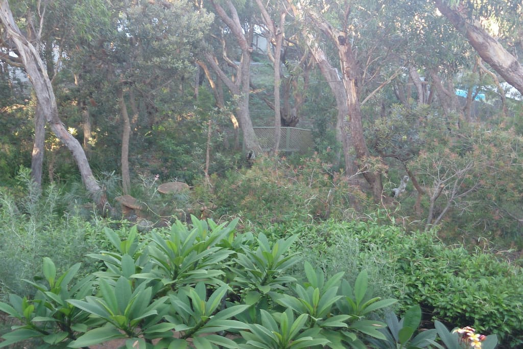 Our bushland garden