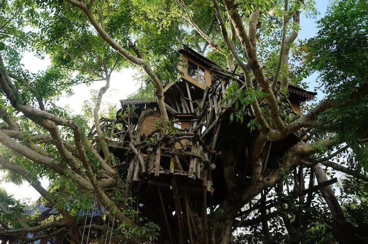 Amazing Tree House - Tambon Mae Hi - 樹屋