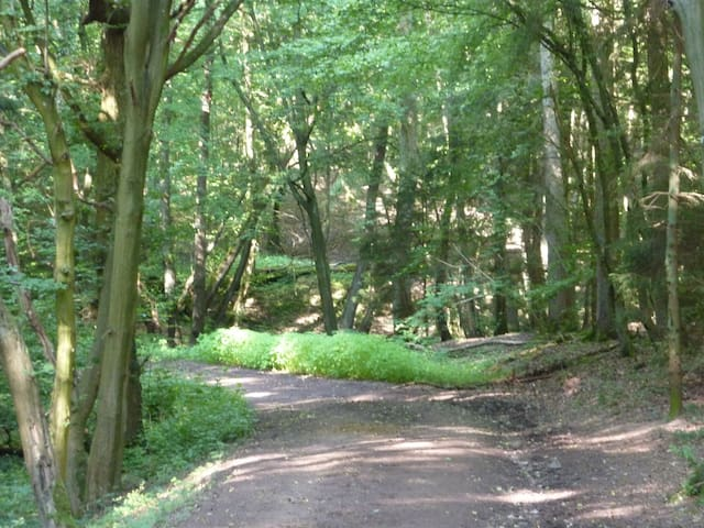 Ausgedehnte Wälder laden zu erholsamen Spaziergängen ein.