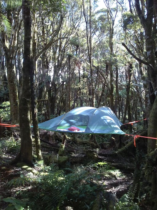 Tree tent - Pupu Rangi Nature Sanctuary