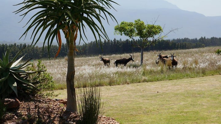 Kwetu Guest Farm Apartment - Dassie