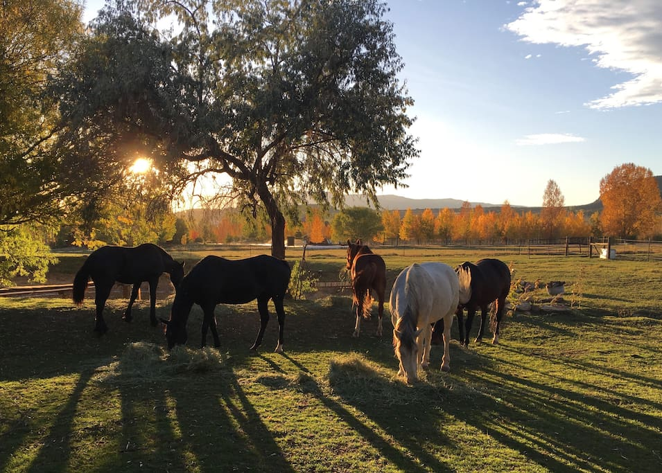 Horses grazing by pond